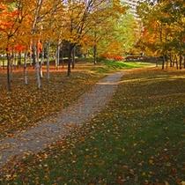 【秋の中島公園】赤黄の葉っぱが緑の芝生に落ちてきれいです