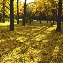 秋の中島公園2