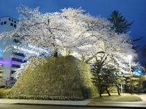 福井城址の夜桜