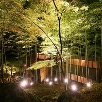 竹林ライトアップ