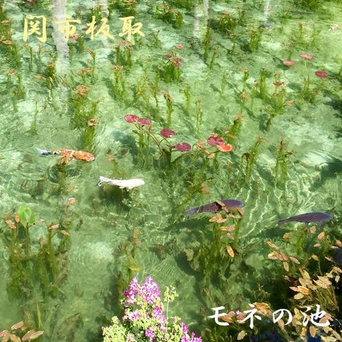 ★モネの池と話題のスポット 根道神社