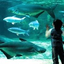 ★世界淡水魚園水族館