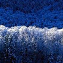 *冬イメージ
