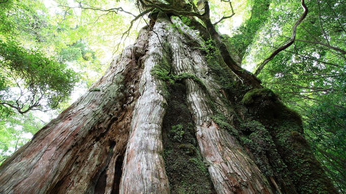 【ガイド+2食付】神秘的で美しい森、山でたくさんの出逢いを体験!縄文杉トレッキングコース