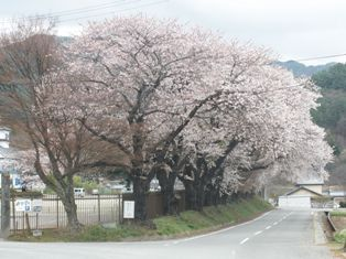 清里高原の春2