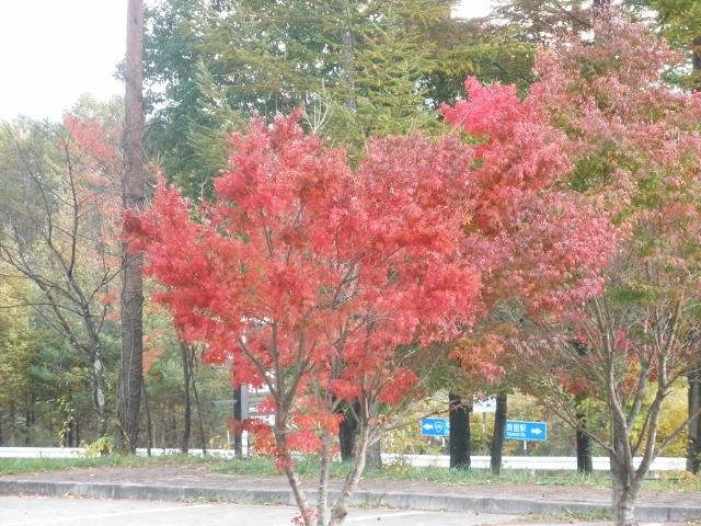 清里高原の紅葉3