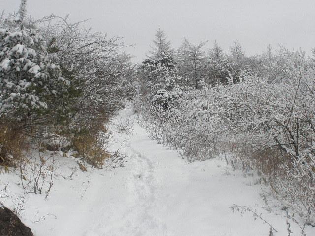 雪中の飯盛山
