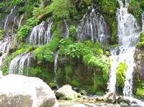 大人気吐竜の滝