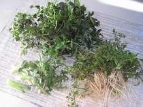 地元で採れる山菜
