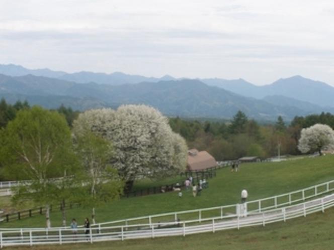 清里高原の春4