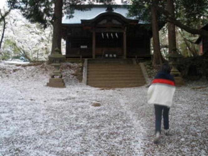 新府城跡桜の花びらの絨毯