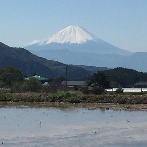 田んぼ越しの富士山