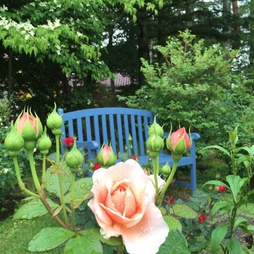 薔薇とベンチ