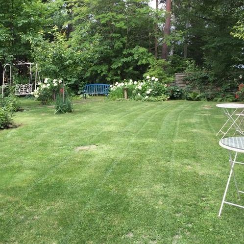 8月の庭6