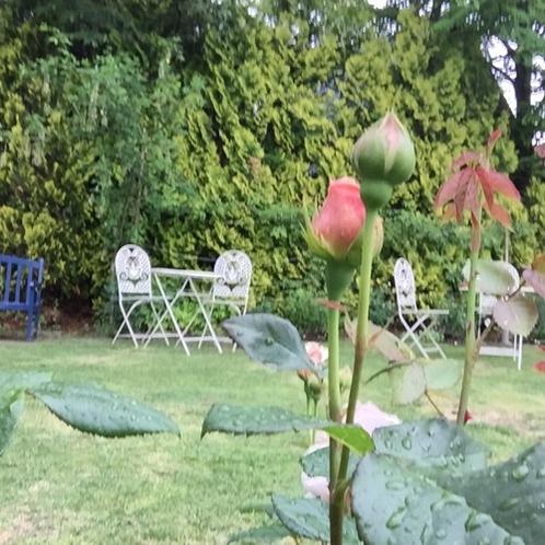 薔薇を見ながらゆっくり
