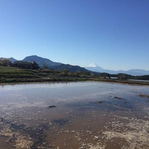 田んぼ越しの風景