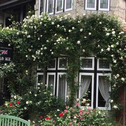 壁沿いの薔薇