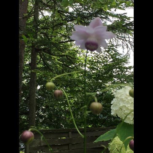 8月の庭3