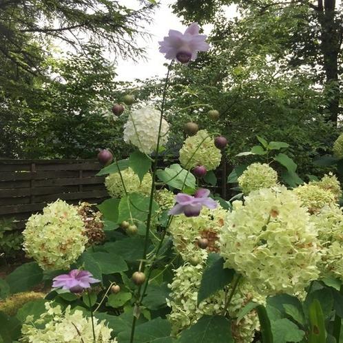8月の庭4