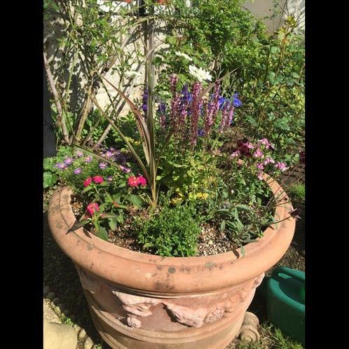 五月の庭5