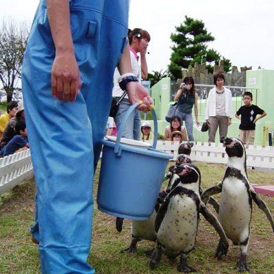 【越前松島水族館】