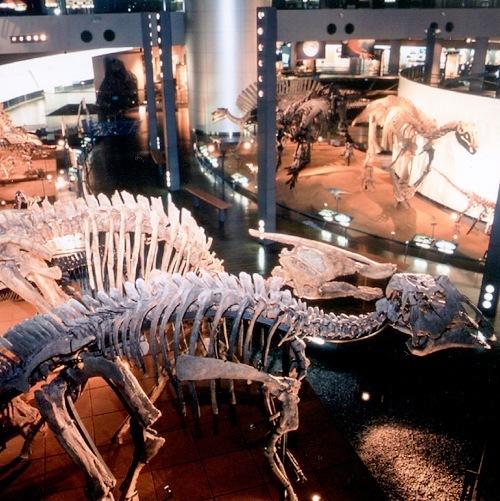 【福井県立恐竜博物館】