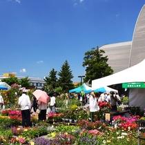 【花フェスタ】旭川大雪アリーナを舞台とした大規模な花の祭典