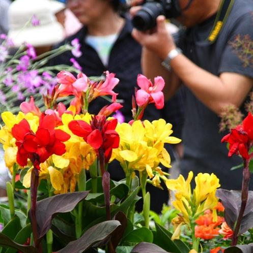 【花フェスタ】上級者から初心者まで気軽に花や緑と触れあえるイベント♪
