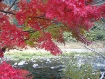 紅葉が綺麗です