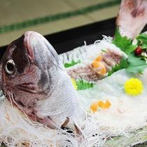 鯛まつり満喫プラン