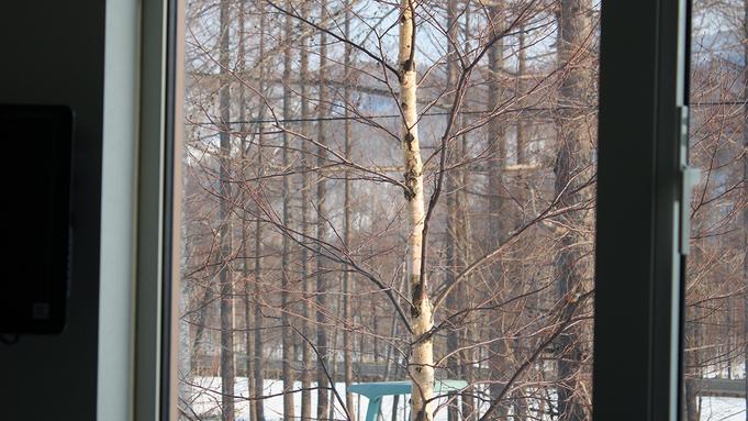 Birch from the window