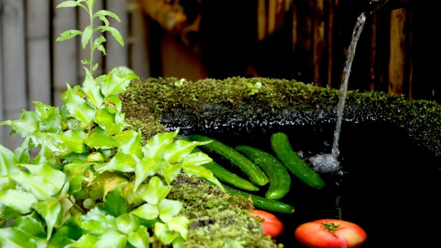湧水でキンキンに冷えた夏野菜。