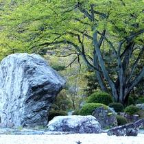 日本庭園 岩