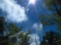 Summer clouds at Garden