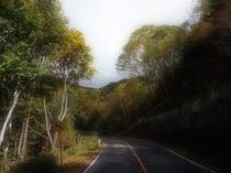 Venus Line Road in Fall