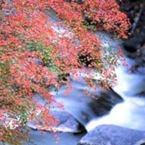 【河津七滝/紅葉】伊豆の紅葉の名所。自然が織りなす美を満喫できます。見頃は11月下旬〜12月上旬