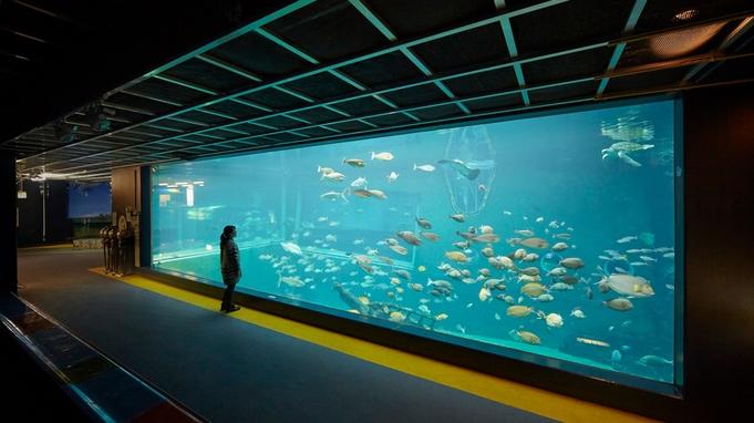 大人気の『温泉アザラシ』に会いに行こう!日本一標高の高い水族館◆【箱根園・水族館入館券付きプラン】