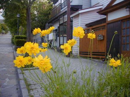 大三坂に咲く花