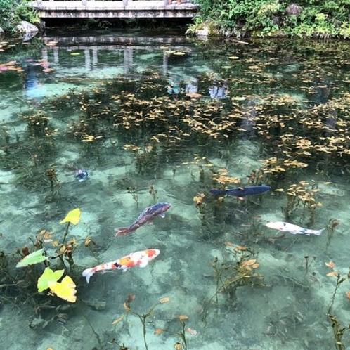 関市内より1時間「モネの池」