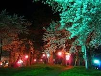 金田一夜桜