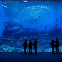 うみの杜水族館(大型水槽)