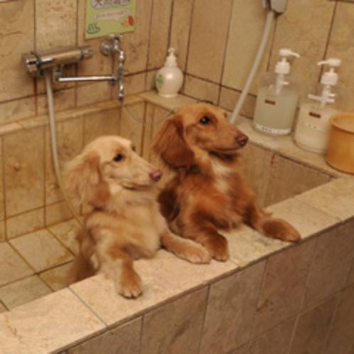 【ふれあいサロン】ペットシャワーも完備 大型犬も大丈夫です