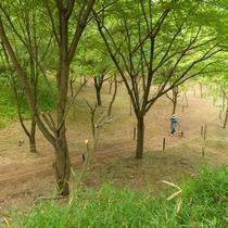 施設の敷地内の遊歩道。森林からのマイナスイオンが気持ちいい!