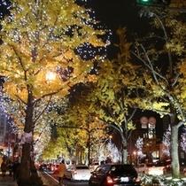 【大阪といえば】御堂筋のライトアップ♪