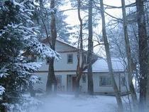冬の森のみち草