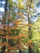 紅葉した庭の木