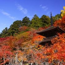 金剛院 関西花の寺