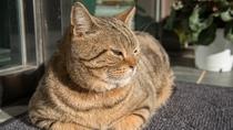 *【江の島猫】