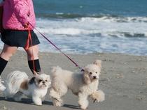 一ツ松海岸で散歩2