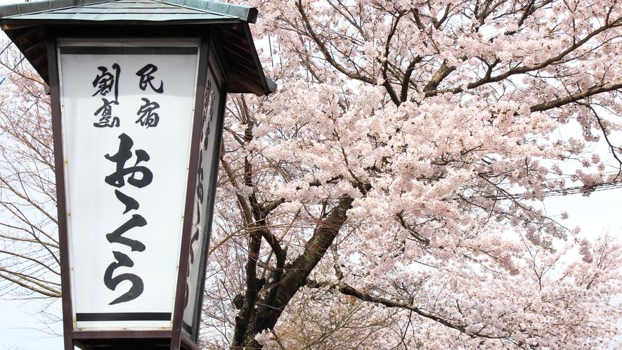 春になると宿の前には桜が鮮やかに咲き誇ります。